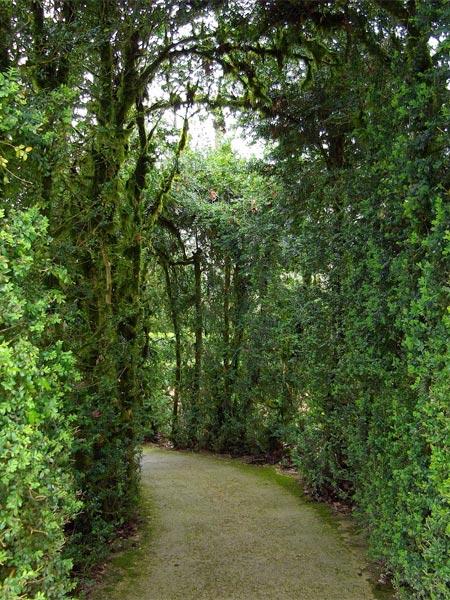 Un tunnel de verdure aux  jardins de Marqueyssac